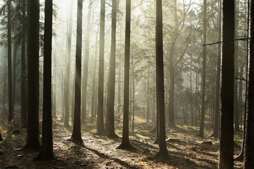 skog2.0