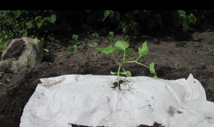 prototyp-odlingsduk